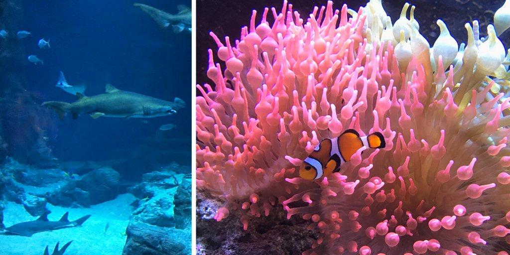Planet Ocean Aqarium Montpellier