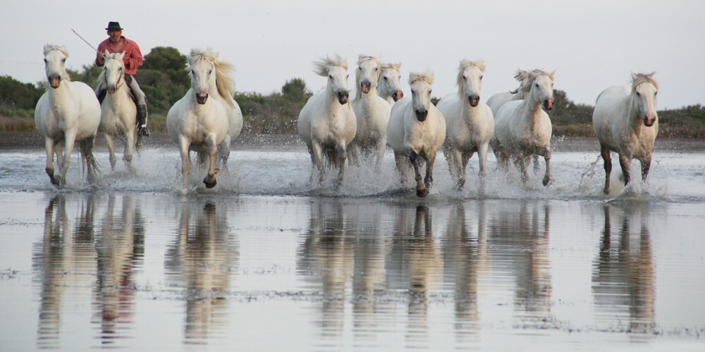 Photo workshop Camargue horses