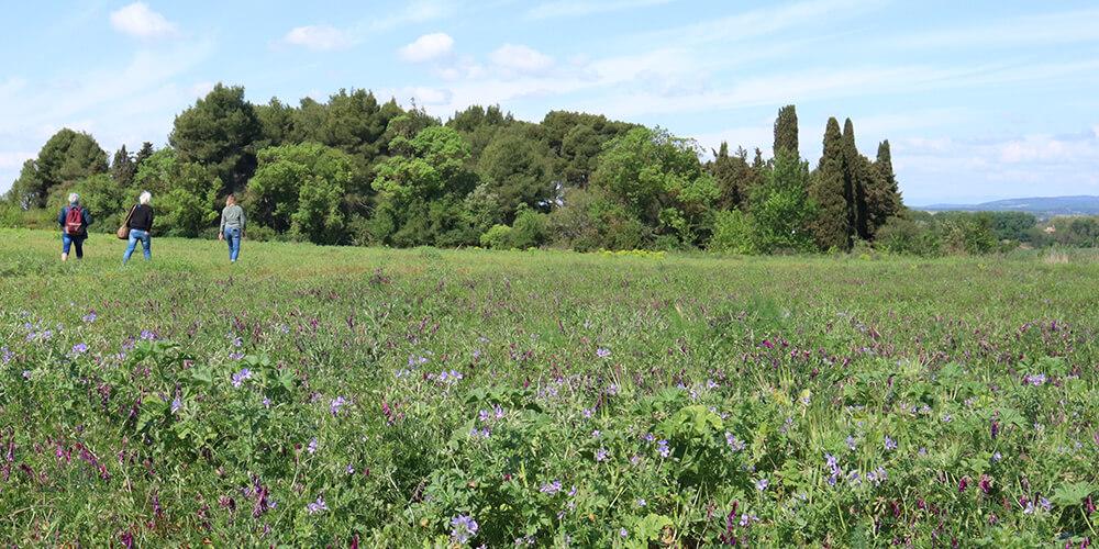 Domaine de la Conseillère edible plants walk